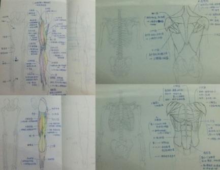 筋骨格を調べてまとめたノート